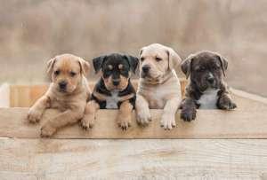 DifferentBreedPuppies