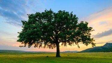 oak-tree-sunset-iStock-477164218-1080x608